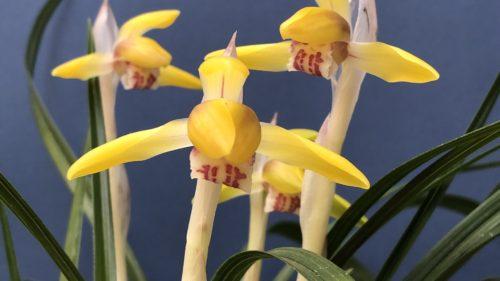 春蘭花物展示会のご案内